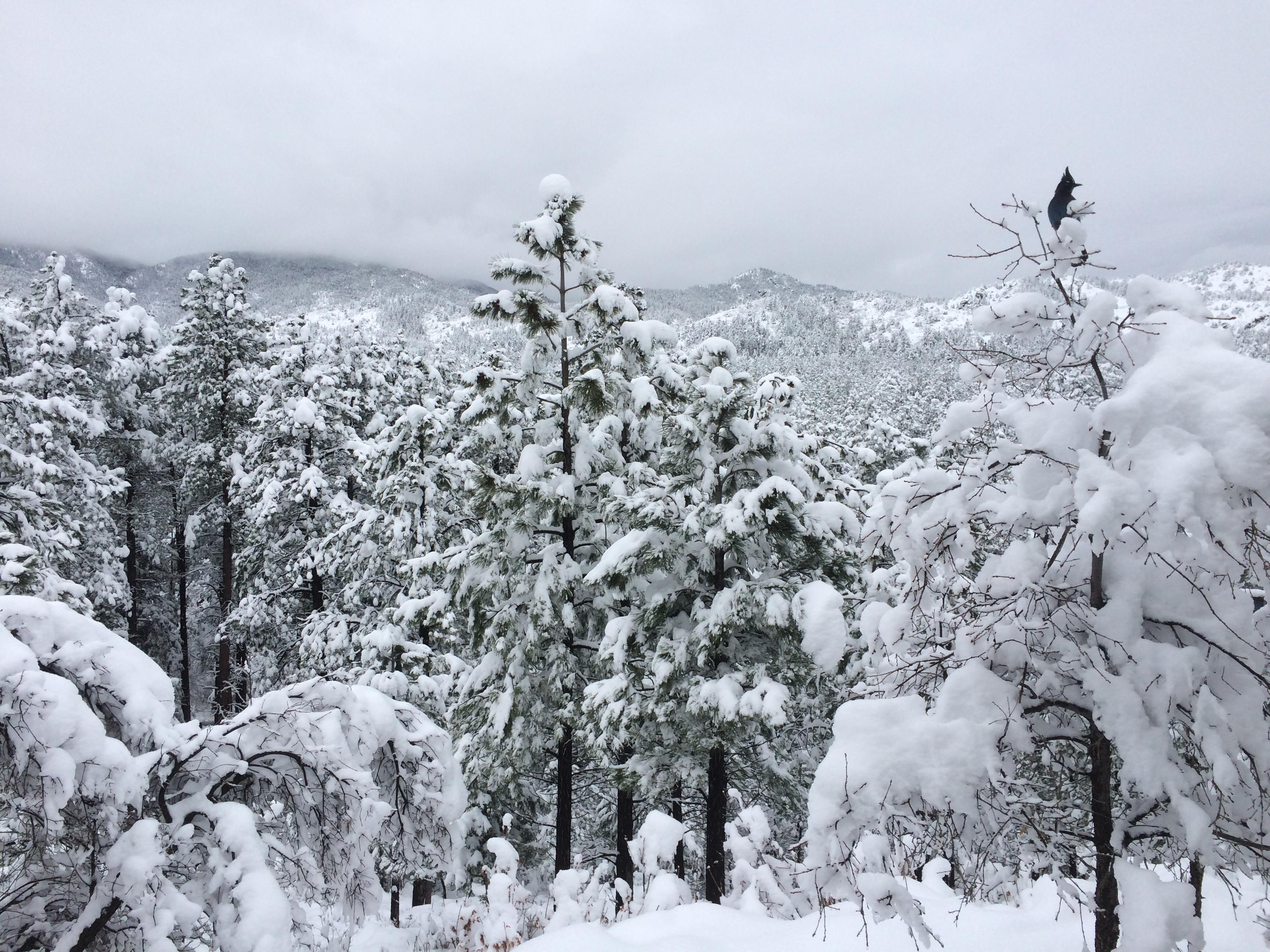 snow-w-jay